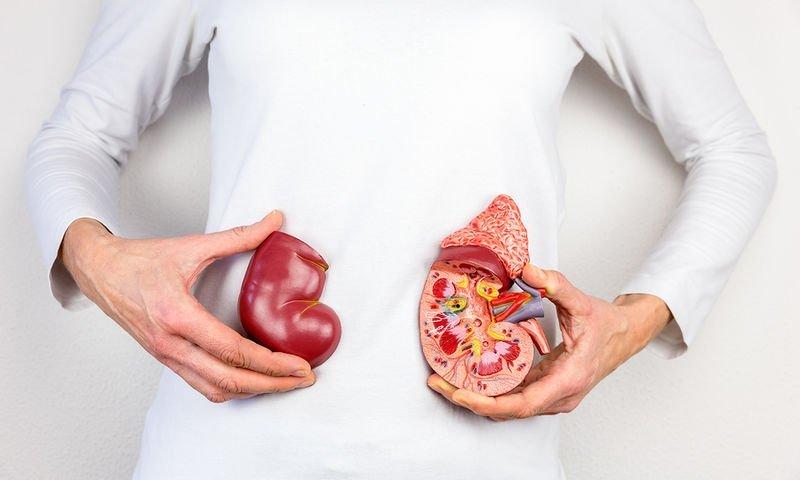 Παγκόσμια Ημέρα Νεφρού: Οι 8 «χρυσοί κανόνες» προστασίας των νεφρών