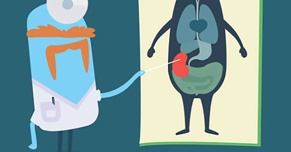 Αντιρροπιστική Υπερτροφία στο Νεφρό