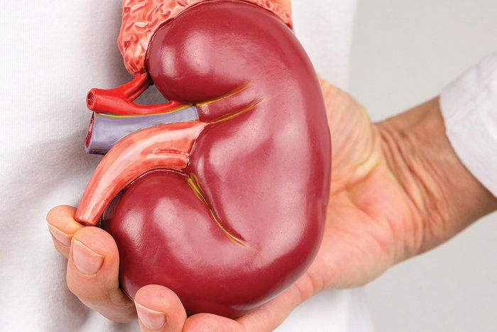 Μονονεφρος ή Μονηρης Νεφρος